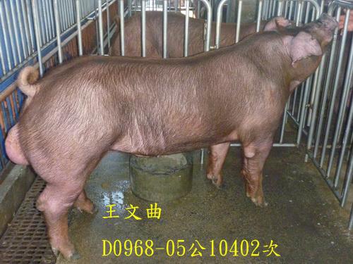 台灣區種豬產業協會10402期D0968-05側面相片