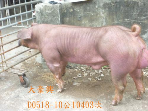 台灣區種豬產業協會10403期D0518-10側面相片