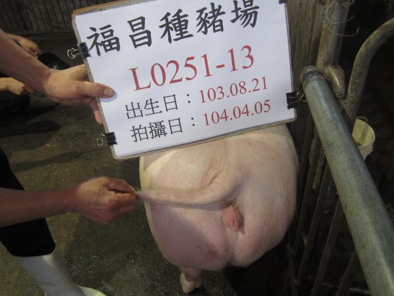 台灣區種豬產業協會10403期L0251-13採精相片