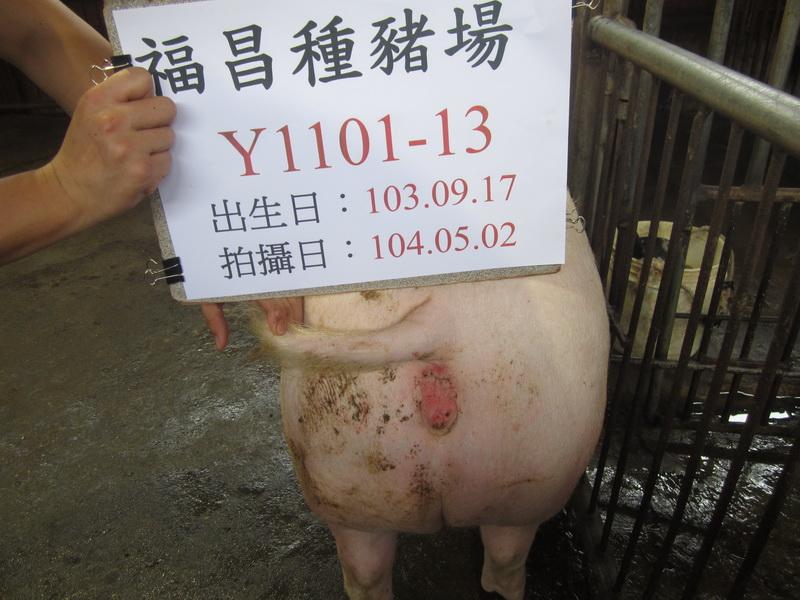 台灣區種豬產業協會10404期Y1101-13後側相片