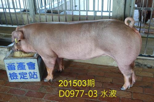 中央畜產會201503期D0977-03拍賣照片