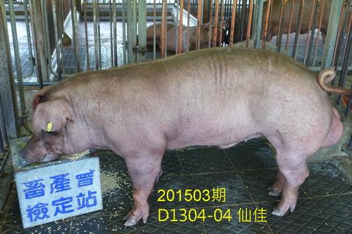 中央畜產會201503期D1304-04拍賣照片