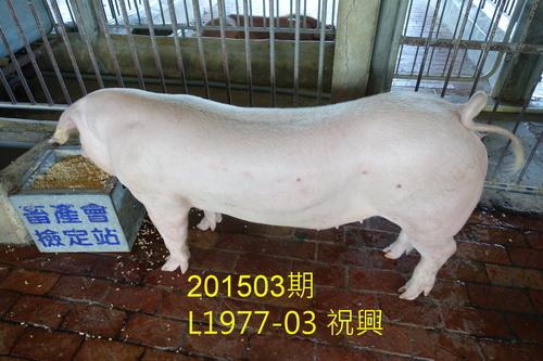 中央畜產會201503期L1977-03拍賣照片