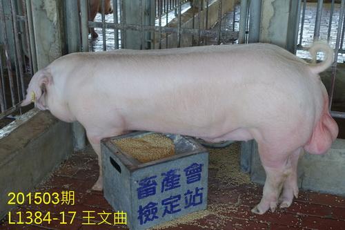 中央畜產會201503期L1384-17拍賣照片