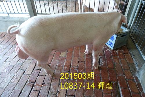 中央畜產會201503期L0837-14拍賣照片