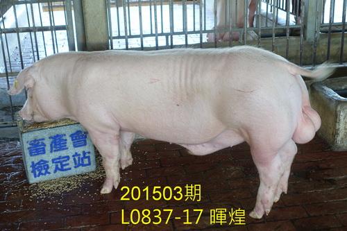 中央畜產會201503期L0837-17拍賣照片