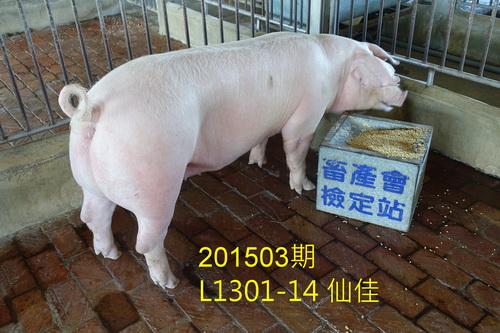 中央畜產會201503期L1301-14拍賣照片