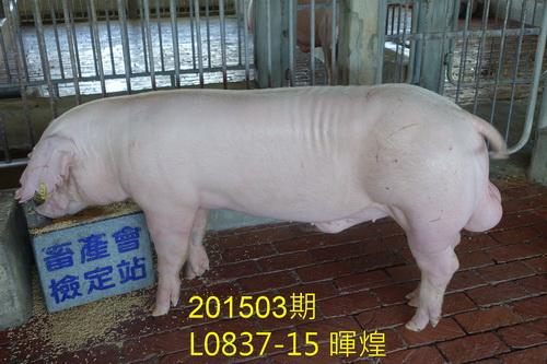 中央畜產會201503期L0837-15拍賣照片