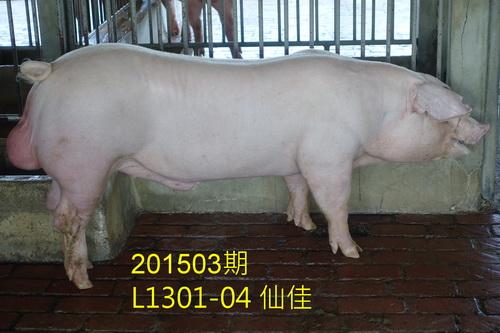 中央畜產會201503期L1301-04拍賣照片