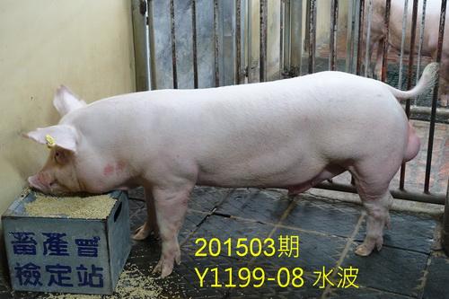 中央畜產會201503期Y1199-08拍賣照片