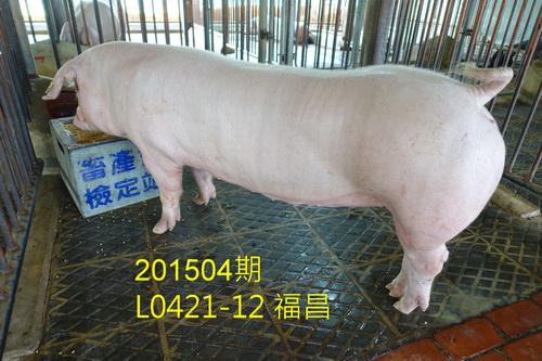 中央畜產會201504期L0421-12拍賣照片