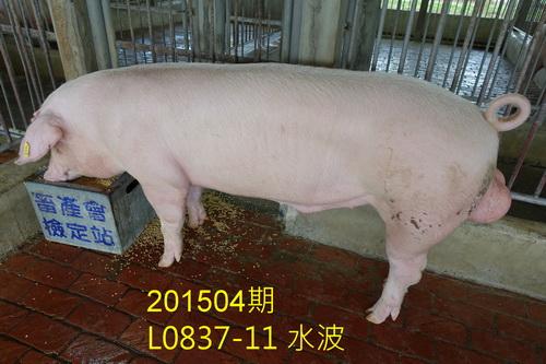 中央畜產會201504期L0837-11拍賣照片