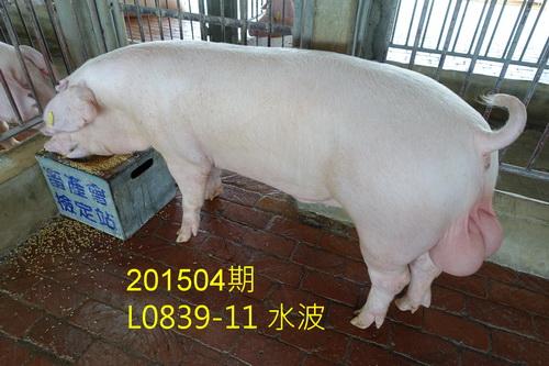 中央畜產會201504期L0839-11拍賣照片