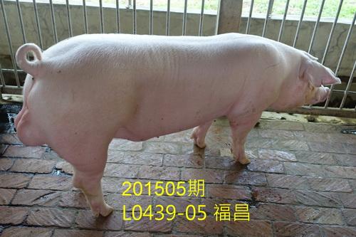 中央畜產會201505期L0439-05拍賣照片