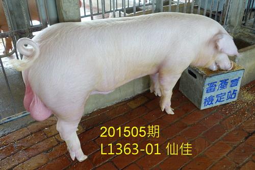 中央畜產會201505期L1363-01拍賣照片