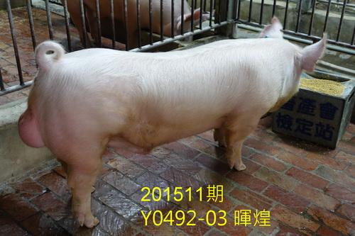 中央畜產會201511期Y0492-03拍賣照片
