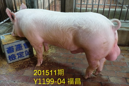 中央畜產會201511期Y1199-04拍賣照片