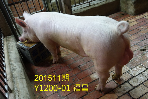 中央畜產會201511期Y1200-01拍賣照片