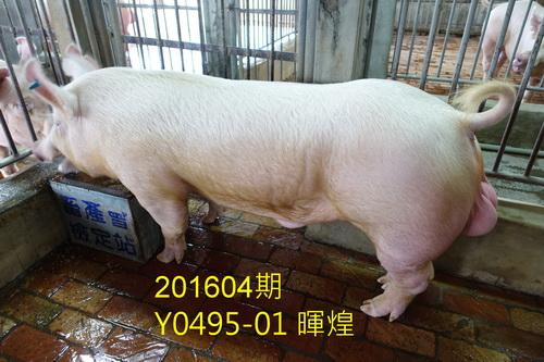 中央畜產會201604期Y0495-01拍賣照片