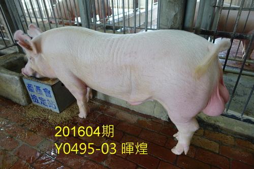 中央畜產會201604期Y0495-03拍賣照片