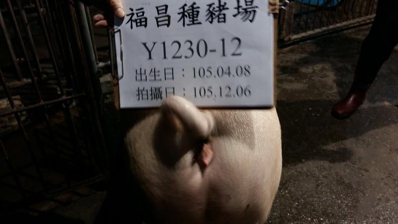 台灣區種豬產業協會10511期Y1230-12後側相片