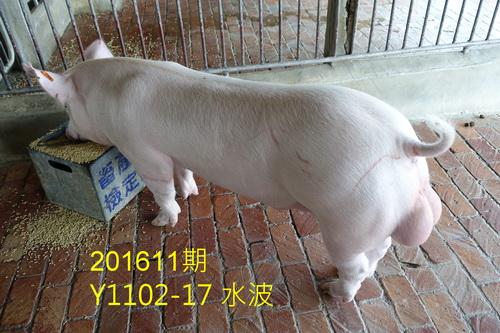中央畜產會201611期Y1102-17拍賣照片