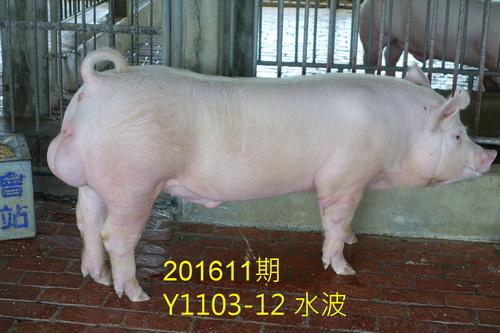 中央畜產會201611期Y1103-12拍賣照片
