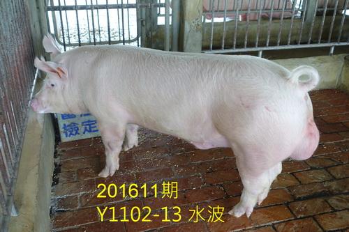中央畜產會201611期Y1102-13拍賣照片