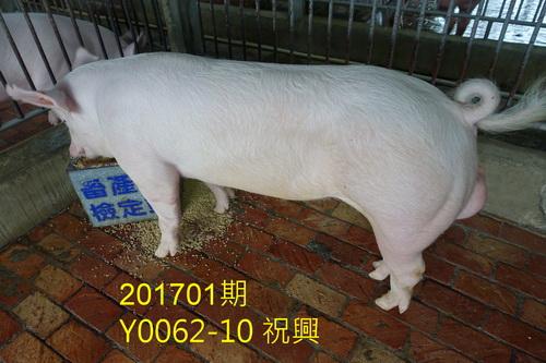中央畜產會201701期Y0062-10拍賣照片