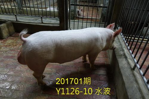 中央畜產會201701期Y1126-10拍賣照片