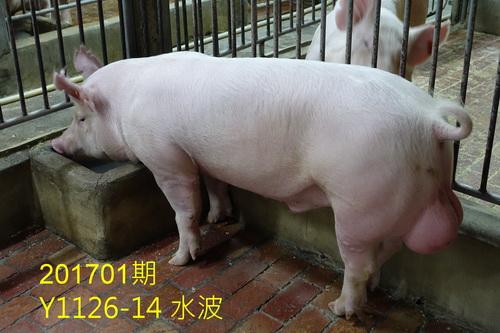 中央畜產會201701期Y1126-14拍賣照片