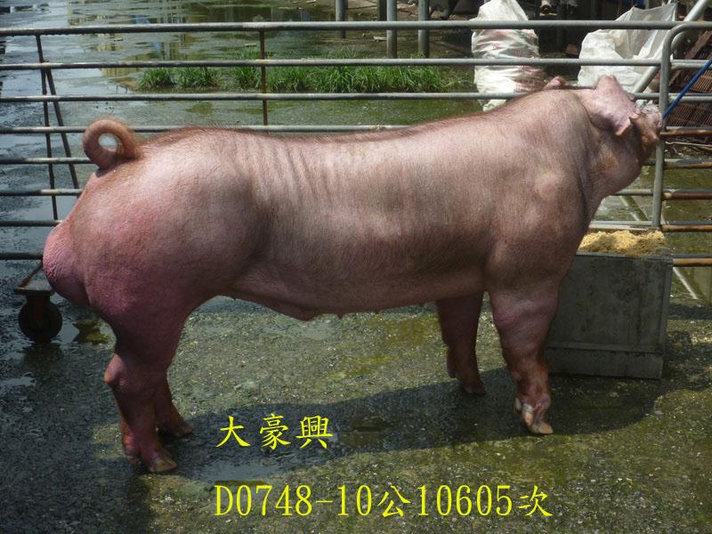 台灣區種豬產業協會10605期D0748-10側面相片