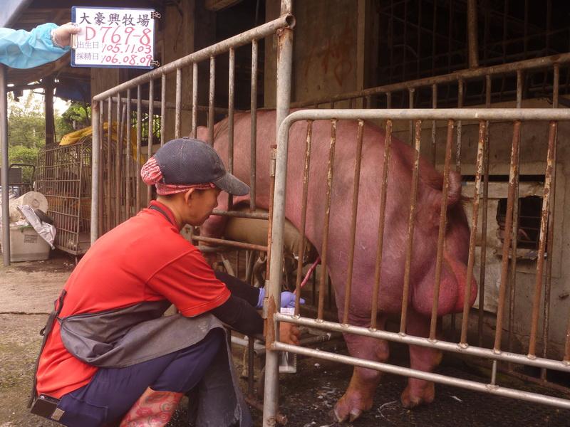 台灣區種豬產業協會10607期D0769-08拍賣影片