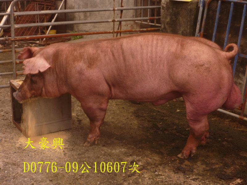 台灣區種豬產業協會10607期D0776-09側面相片