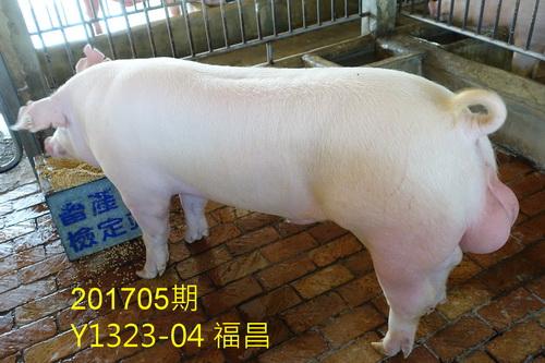 中央畜產會201705期Y1323-04拍賣照片