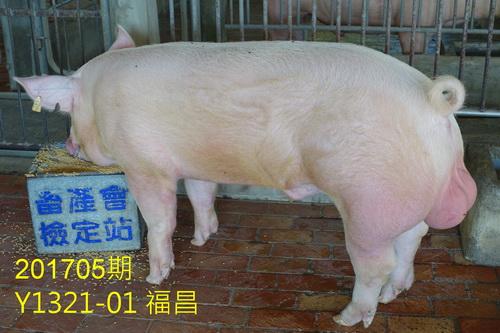 中央畜產會201705期Y1321-01拍賣照片