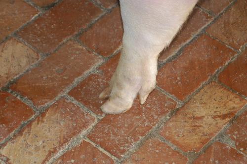 中央畜產會201705期Y1321-01體型-四肢相片