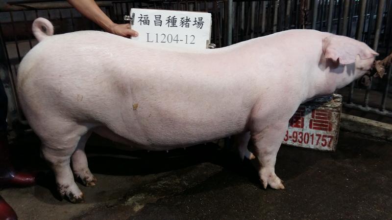 台灣區種豬產業協會10611期L1204-12側面相片