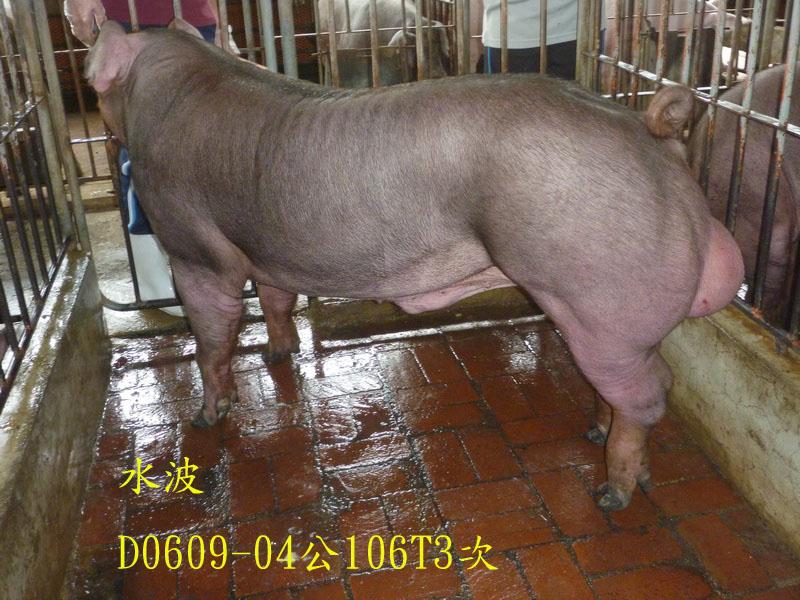 台灣區種豬產業協會場內檢定106T3次D0609-04側面相片