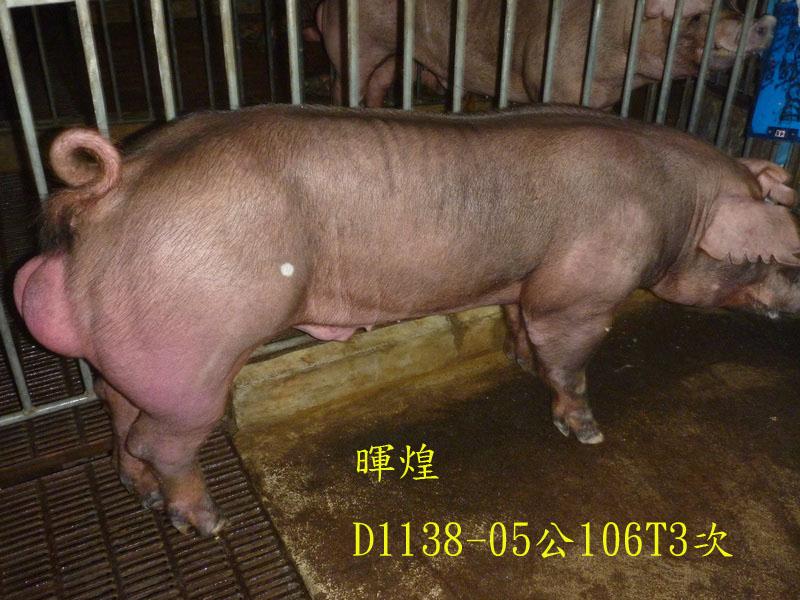台灣區種豬產業協會場內檢定106T3次D1138-05側面相片