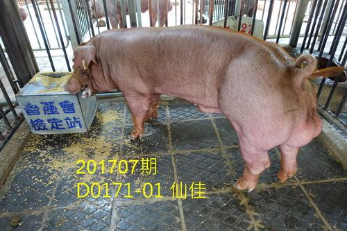 中央畜產會201707期D0171-01拍賣照片