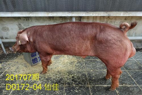 中央畜產會201707期D0172-04拍賣照片