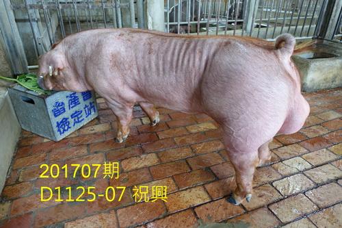 中央畜產會201707期D1125-07拍賣照片