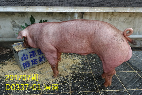 中央畜產會201707期D0337-01拍賣照片