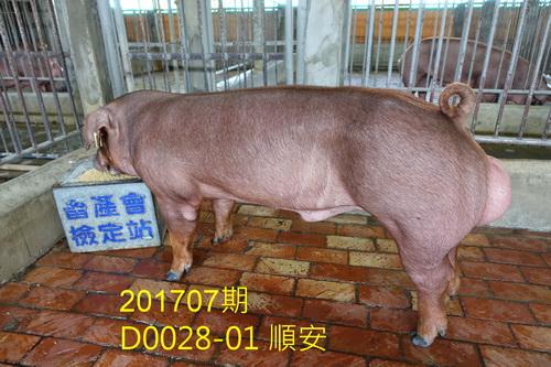 中央畜產會201707期D0028-01拍賣照片
