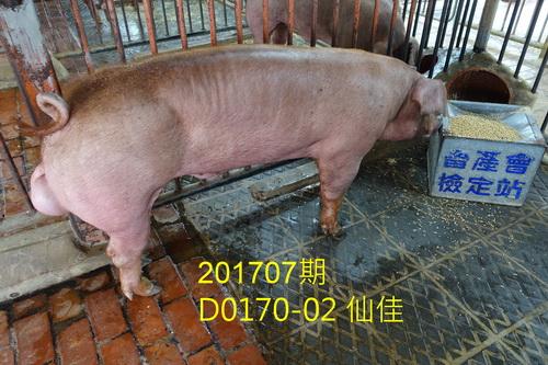 中央畜產會201707期D0170-02拍賣照片