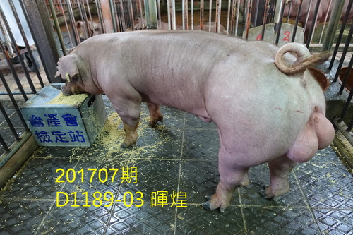 中央畜產會201707期D1189-03拍賣照片