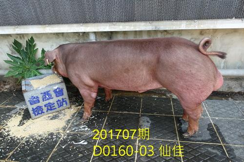 中央畜產會201707期D0160-03拍賣照片