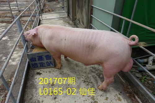 中央畜產會201707期L0165-02拍賣照片