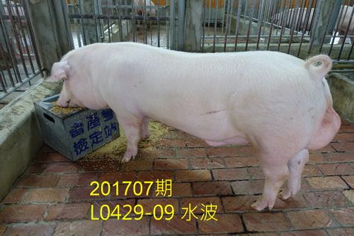 中央畜產會201707期L0429-09拍賣照片